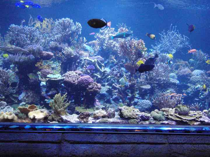 10 Questions to Ask Yourself Before Getting a Saltwater Tank