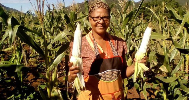 Photo shows Busisiwe standing in a field of maize and smiling