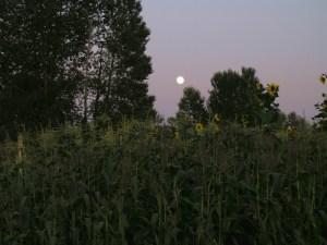 Sun sets over Marra Farm