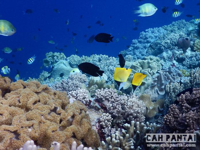 Wakatobi, Surga Bawah Laut