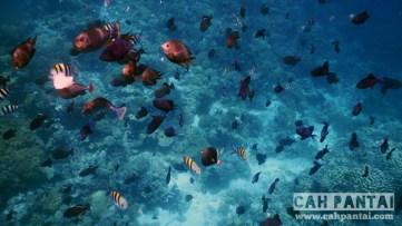 Banyak ikan di spot Roma