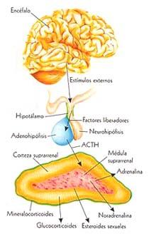 Hipotension ortostatica