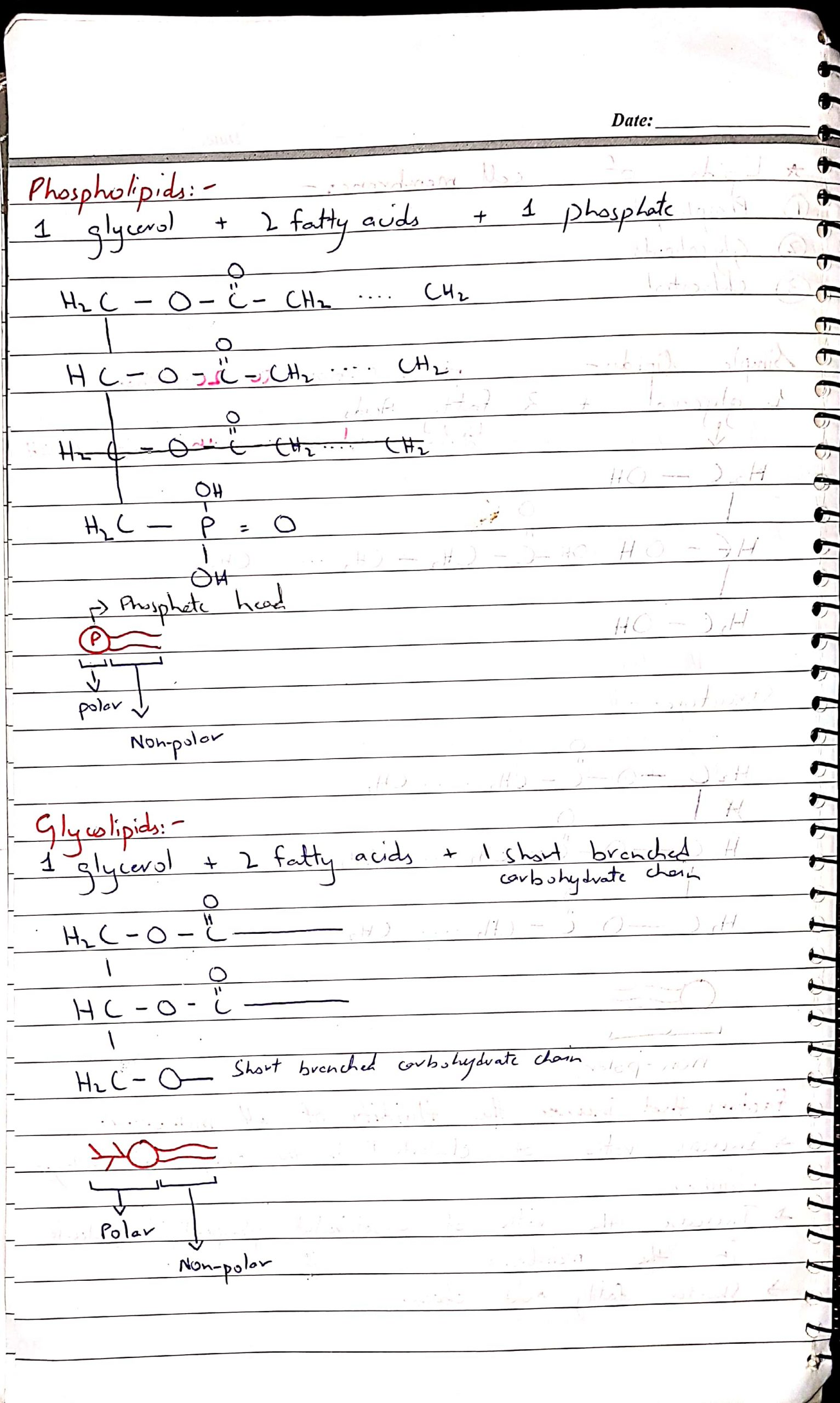 As biology notes by Dr Husnain chap Cell Membrane_4
