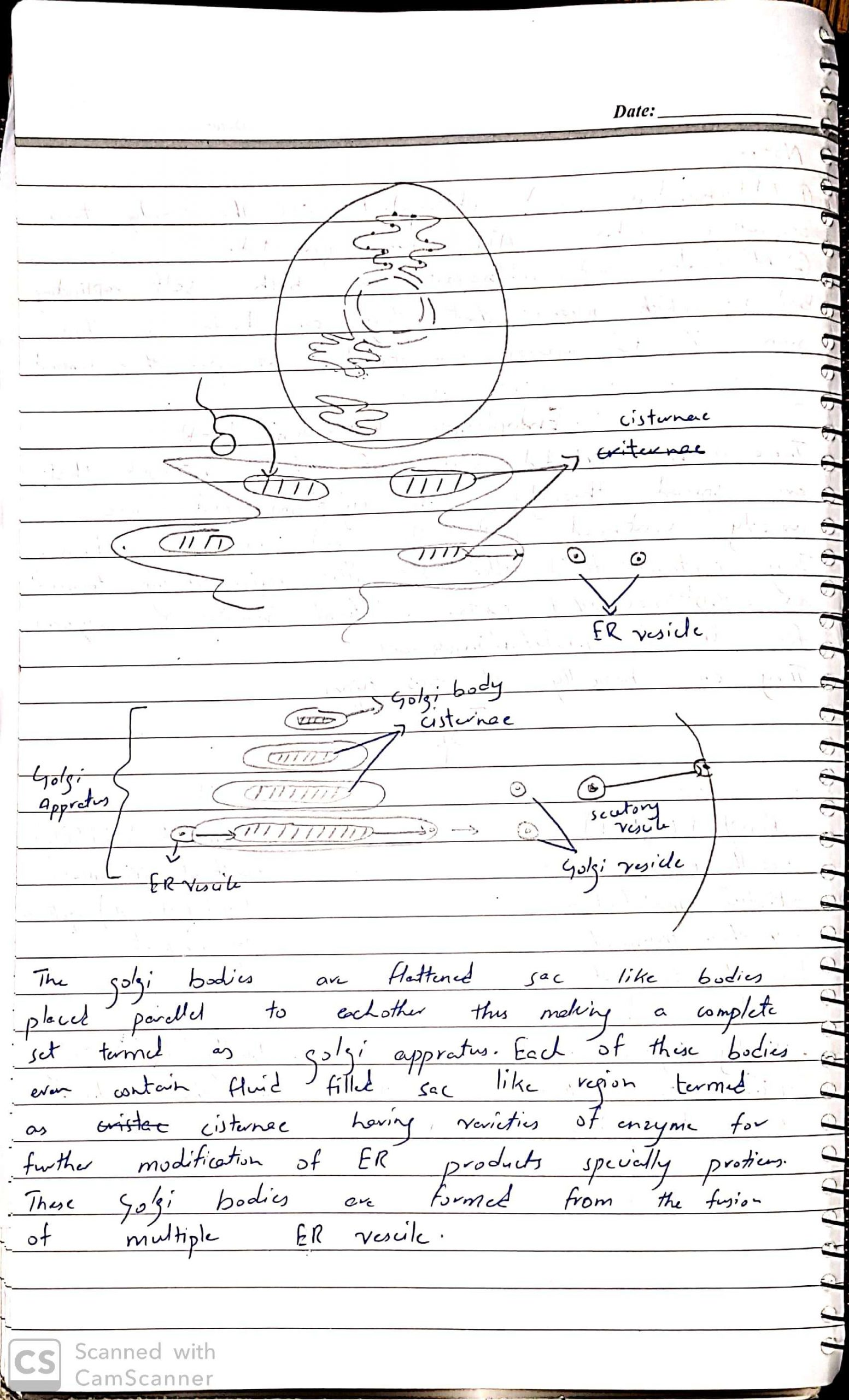 As bio by Dr Husnain CELL ORGANELLES 3_6