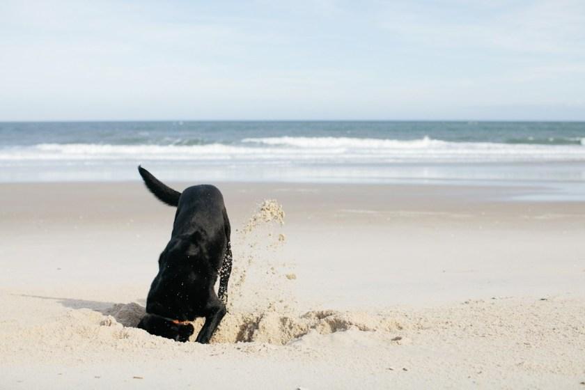 Dog-Friendly-Bald-Head-Island-NC-Beach