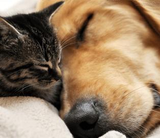 Maus tratos contra animais podem render até dez anos de prisão
