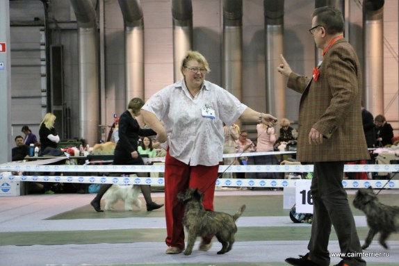 exhibition cairnterrier (4)