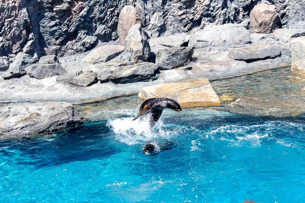jumping seals at Mystic Aquarium