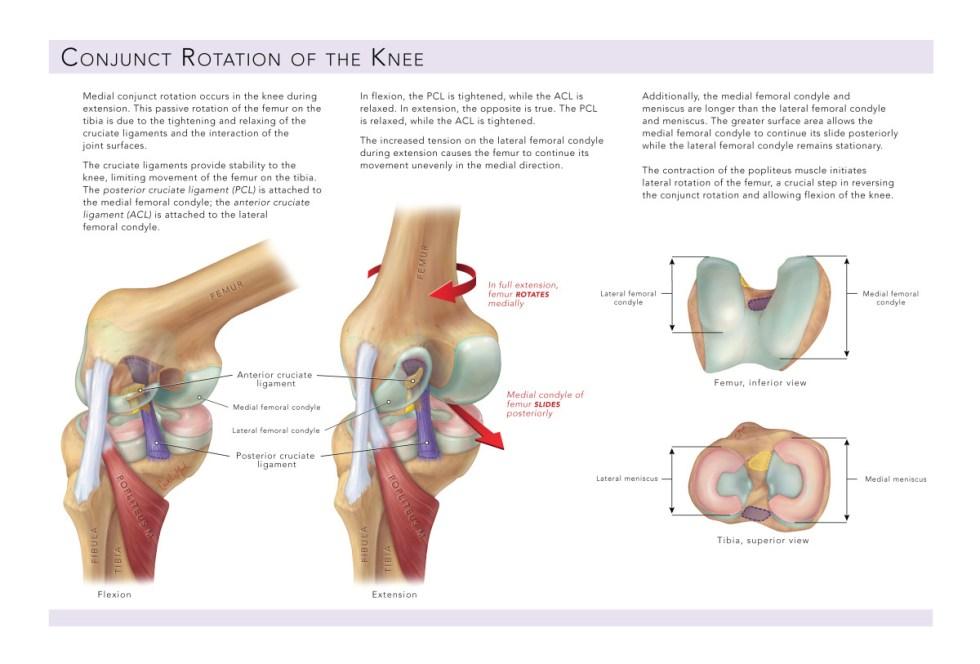C Mock knee, vertical 2