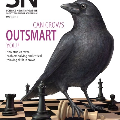 Can Crows Outsmart You? / Photoshop, Cinema4D
