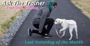 Dog Training Allentown PA