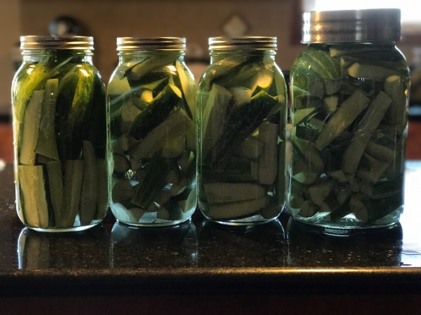 Cucumbers in brine for 24 hours