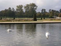 Swans and le grand parterre