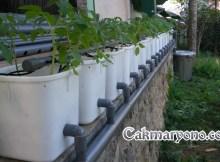fertigasi hidroponik tomat