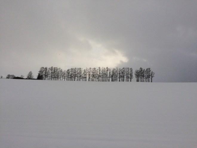 美瑛 雪のマイルドセブンの丘