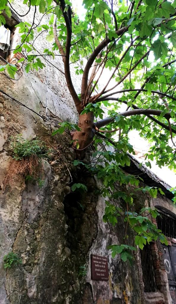 A Ficuzza in old Cosenza