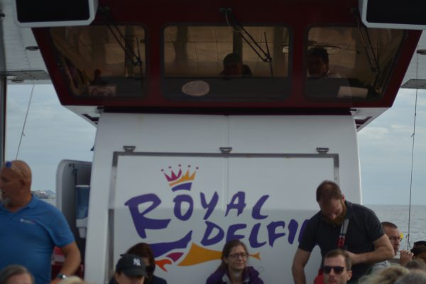Royal Delfin