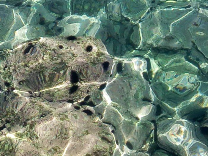 arici de mare