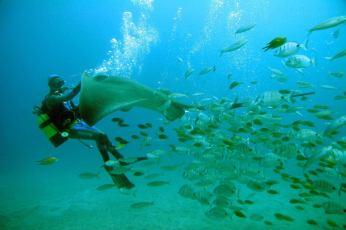 Safari subacvatic cu submarinul