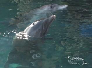 Eilat, Dolphin Reef