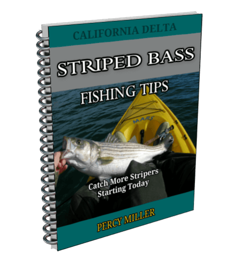 Striped bass fishing tips report
