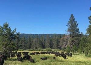 Public lands grazing