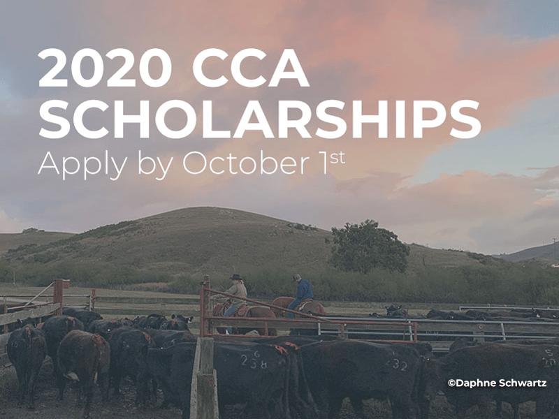 2020 CCA Scholarship, Apply by Oct 1