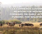 CCA Commends Governor Newsom for moving forward on early action funding for wildfires