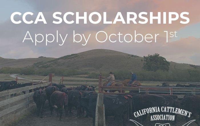 CCA Scholarship, Apply by Oct 1