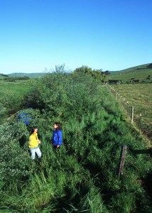 CA NRCS - Buffer strip in Sonoma County