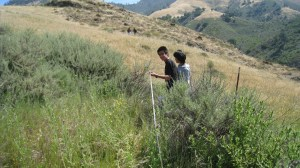 Rangeland monitoring