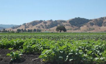 Santa Clara County farmland near Gilroy 1