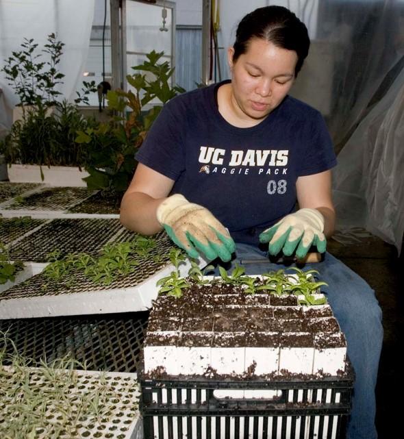 Community volunteer sits in a greenhouse transplanting seedlings into growing tubes