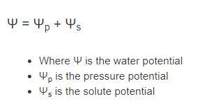water potential formula