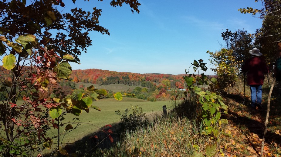 Fall Palette in the Hockley Valley