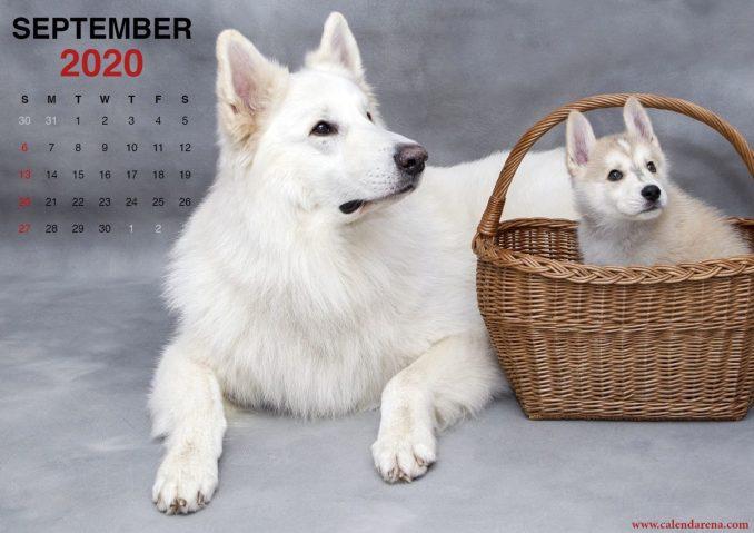 Calendar sheet September 2020 little puppy