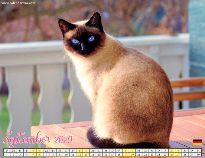 Kätzchen von September 2020 Kalendern