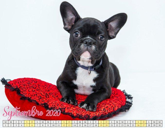 calendario septiembre 2020 con cachorros_4