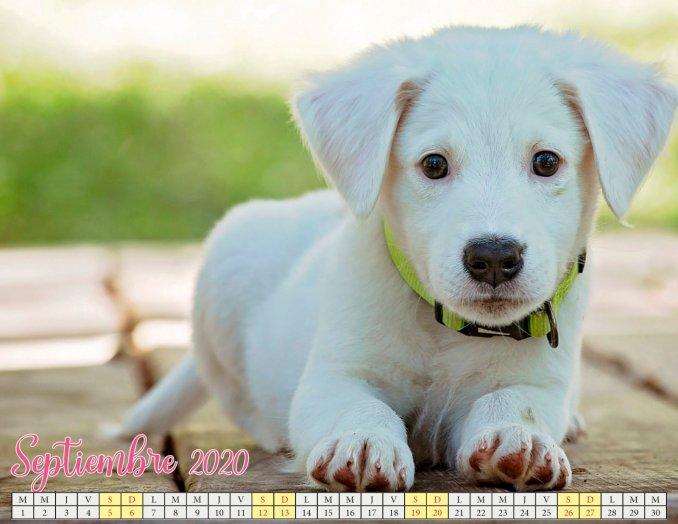 calendario septiembre 2020 con cachorros_5