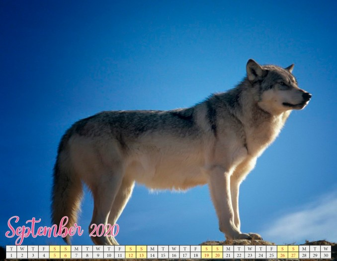 september 2020 calendar with puppies2