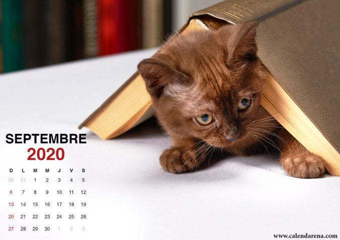 wallpaper calendrier septembre 2020 chiots2