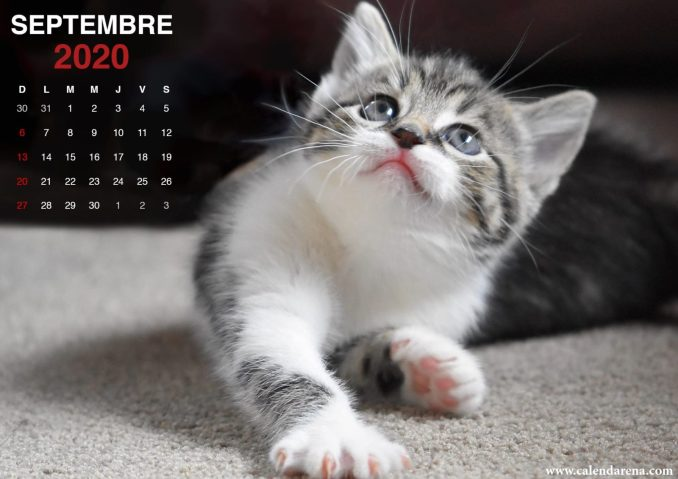 wallpaper calendrier septembre 2020 chiots4