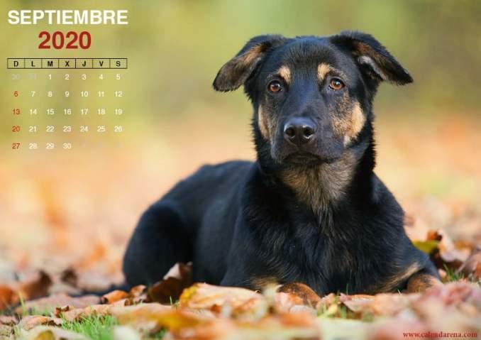 Calendario mensual de septiembre de 2020 perrito