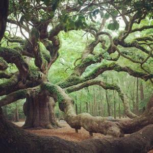 calendrier lunaire du 23 au 24 janvier arbre