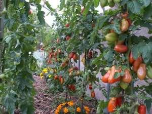 calendrier lunaire améliorer la terre du jardin