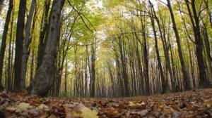 calendrier lunaire nature sylviculture foret d'automne