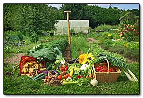 calendrier lunaire jardiner avec la lune juillet 2016