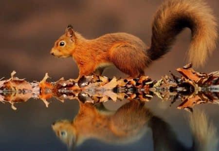 calendrier lunaire ecureuil 7