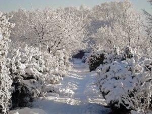 calendrier lunaire - jardiner avec la lune 2021 - janvier