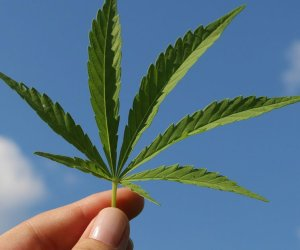 Final Vote Set on Increasing Retail Pot Permits in Calexico